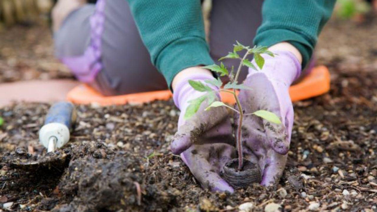 Aprenda a montar a sua horta em casa e venda orgânicos no delivery